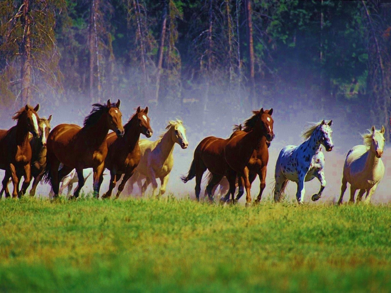 : مملكة الحيوان (1)
