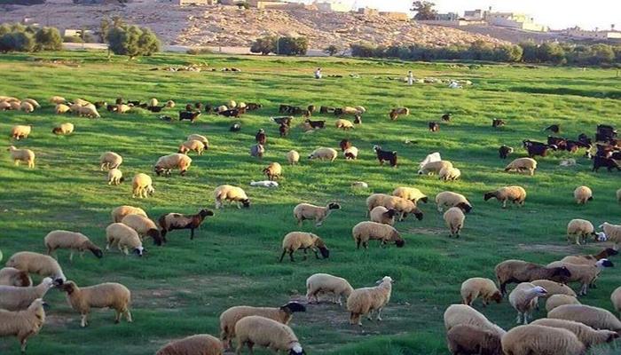 : ليبيا.. روائح البارود لم تمنع قدوم الربيع