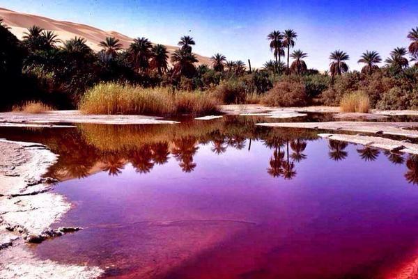 : بحيرة قبر عون.. ابتسامة الصحراء